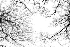 Bare tree branches on a white background. Bare tree branches on a pale white background Royalty Free Stock Photos
