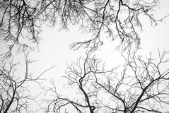 Bare Tree Branches. On a white pale sky Stock Photo