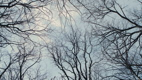 Bare Tree Branches on a white pale sky. 4K RAW Blackmagic Production Camera stock video footage