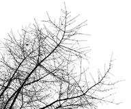 Bare tree branches on a white sky Royalty Free Stock Photography