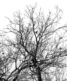 Bare tree branches on a white sky Stock Photos