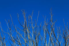 Bare tree branches in winter. Against blue sky Stock Photo