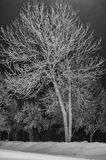 Bare tree branches in winter. Bare tree branches in black and white Royalty Free Stock Photos