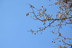 Bare Tree Branches and Winter Sky Royalty Free Stock Images