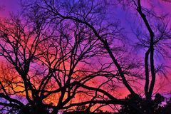 Bare tree branch. Against beautiful sky after sunset Stock Photos