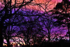 Bare tree branch. Against beautiful sky after sunset Stock Images