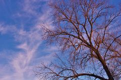 Bare tree branch. Against blue sky Stock Photography