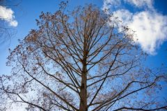 Bare tree in the winter royalty free stock photos