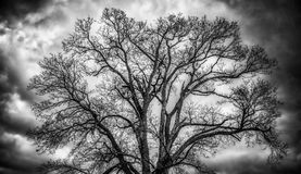 Bare tree and clouds stock photos