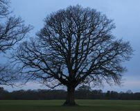 A bare tree on a cloudy winter morning on Southampton Common stock photos