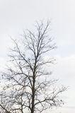 Bare tree with copyspace Stock Photography