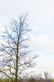 Bare tree with copyspace Royalty Free Stock Photos