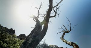 Bare tree in countryside 4k. Bare tree in countryside on a sunny day 4k stock footage