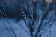 Bare Tree Covered With Snow Stock Image