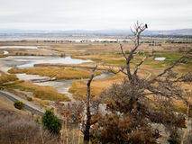 Bare tree with crow in Coyote Hills Regional Park. Wetlands and Marsh with dead tree and large bird in Coyote HIlls Regional Park in East Bay along San Francscio Stock Image