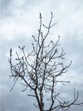 Bare tree with dark cloudy sky in the background stock photos
