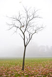 The bare tree with fallen leaves on a foggy day, Dulwich Park, England Stock Photo