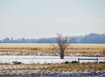 A bare tree by a fence Royalty Free Stock Image