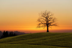 Bare tree on field Royalty Free Stock Image