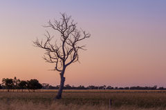 Bare tree in the field at sunset. Bare tree in the field at sunset Stock Photo