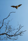 Bare tree with flying bat vertical image. Halloween background with flying bat over blue sky background Stock Image