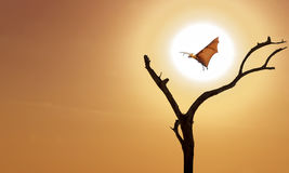 Bare tree with flying fox on orange sky. Halloween background with flying fox over bright yellow sky background Stock Photos