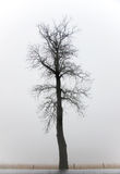 Bare tree in fog Stock Photos