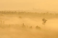 Bare Tree In A Fog Covered Royalty Free Stock Photo