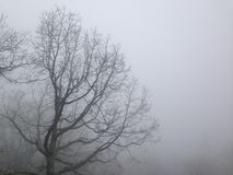 Bare tree in the fog. Bare tree in the mist/fog Royalty Free Stock Photo