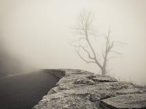 Bare Tree in Fog Stock Photo