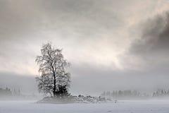 Bare tree in foggy landscape Stock Photo