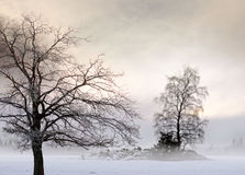 Bare tree in foggy landscape Royalty Free Stock Images