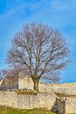 Bare Tree in Fort. Bare Tree in the Shumen fortress, Bulgaria Stock Photos