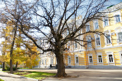Bare tree in front of the building Royalty Free Stock Image