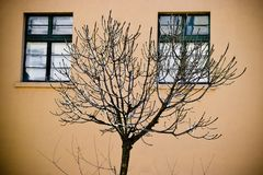 Bare tree in front of house. Winter bare tree in front of house with two windows Royalty Free Stock Images