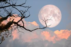 Bare tree on full moon at evening. Element of this image furnished by NASA Royalty Free Stock Image