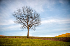 Bare tree hill top autumn landscape Stock Photography