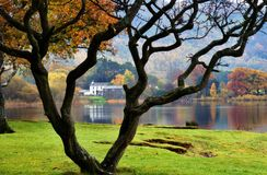Bare Tree & House By Lake Stock Images