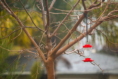 Bare tree with hummingbird feeder on rainy day Stock Images