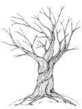 Bare tree illustration stock photo