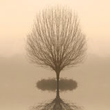 Bare Tree In Fog At Dawn Royalty Free Stock Photography