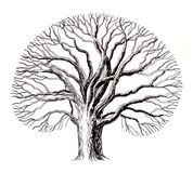 Bare tree. Ink drawing of a bare tree Royalty Free Stock Images
