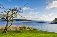 Bare tree beside Keilder Water Reservoir Stock Images