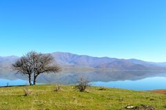 Bare tree and a lake. Capture of a beautiful bare wild pear tree and the view of the Small Prespa Lake, Greece, with mountain reflections Royalty Free Stock Photos
