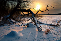 Bare tree by lake in winter. Bare tree by lake at sunset in winter Stock Photos
