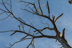 Bare tree without leaves and blue sky in autumn royalty free stock photos