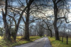 Bare tree limbs frame Sparks Lane in Cades Cove. Bare, spooky tree limbs line the road in Cades Cove Royalty Free Stock Image