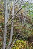 Bare Tree Limbs. A view of bare tree limbs as winter nears stock photo