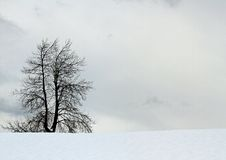Bare tree without midfield sheet of snow Royalty Free Stock Images