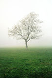 Bare tree on a misty meadow Stock Photos